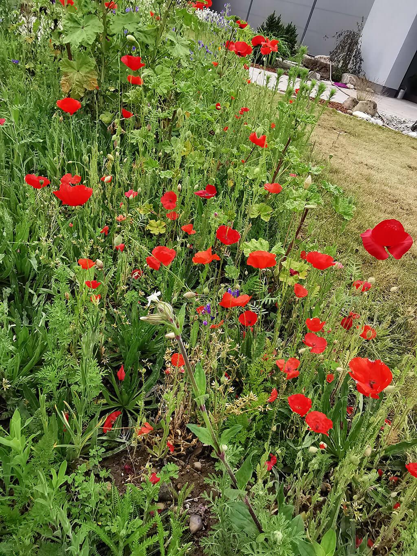 biotop-natur-landschaft-gartenbau-gerteiser-5
