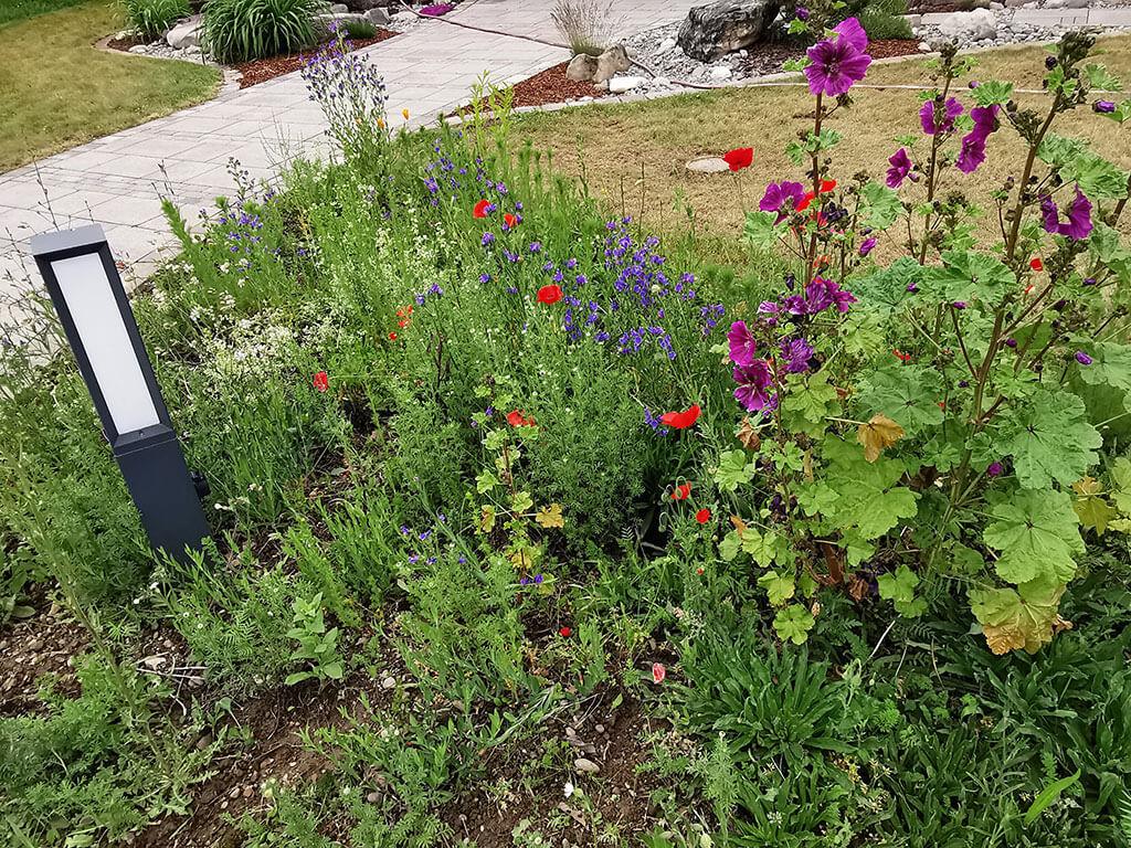 biotop-natur-landschaft-gartenbau-gerteiser-6