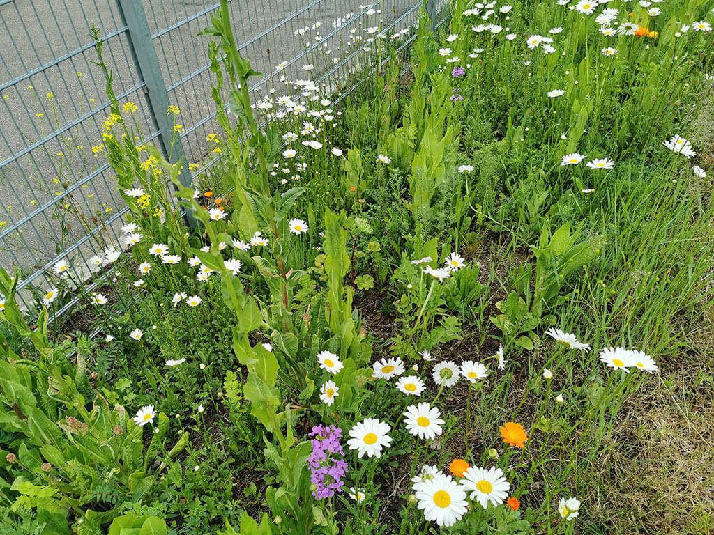 biotop-natur-landschaft-gartenbau-gerteiser-8